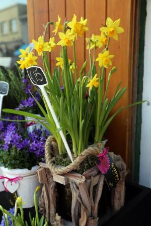 Scarecrow Flowers_2745